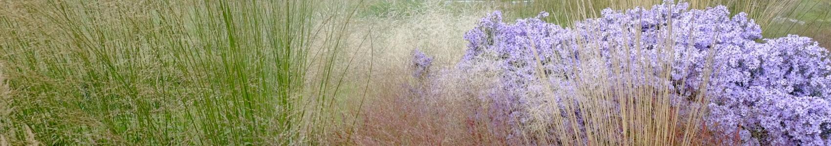 græsser til haven